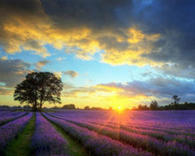Load image into Gallery viewer, Lavender Fields Paint by Numbers