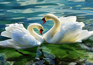 Swans in Water Pond Paint by Numbers