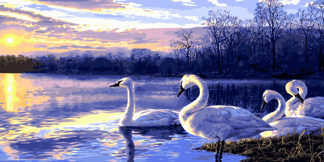 Swans in the Lake Paint by Numbers