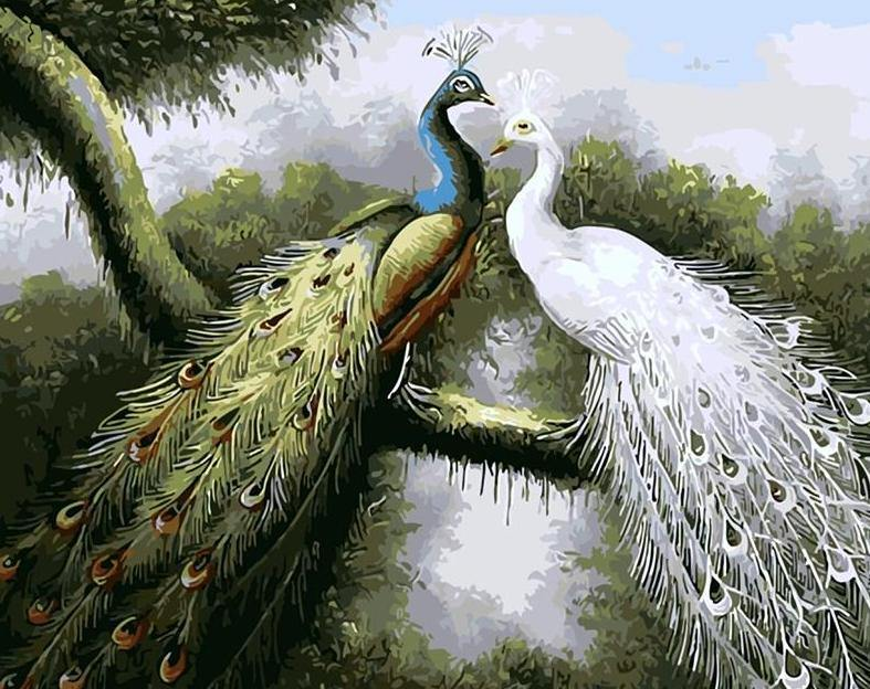 Peacocks Pair Paint by  Numbers