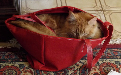Kitty sleeping in purse