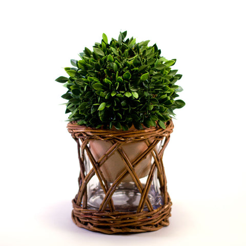 Small Willow Curved Vase or Votive Holder  http://www.napavalleyhomeandgarden.com/products/the-little-vase