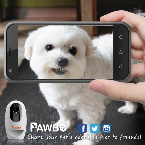 Buy Pawbo Wi-Fi Pet Camera and Treat Dispenser and other gifts online - The Fowndry
