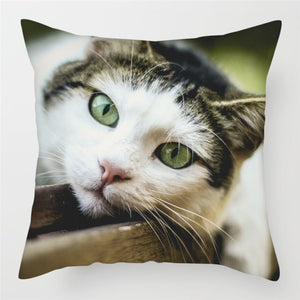 Cute Cat Pillow Cases for Sofa