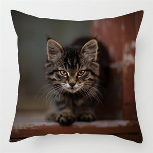 Cute Cats Pillow Cases for Sofa, Home, Chairs and Decoration