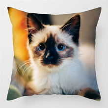 Load image into Gallery viewer, Cute Cat Pillow Cases for Sofa