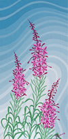 Northern Fireweed