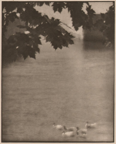 Ducks, Lake Como by Karl Struss