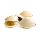 Frozen Boiled Whole Shell White Clam [1Kg]