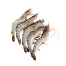 Frozen Black Tiger Prawn PDTO 21/25 1Kg