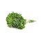 Italian Parsley [15g]