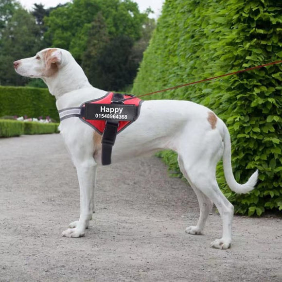 Harnais personnalisé Safety pour chien - Home & Garden Furniture / Pet Products / Dog Supplies