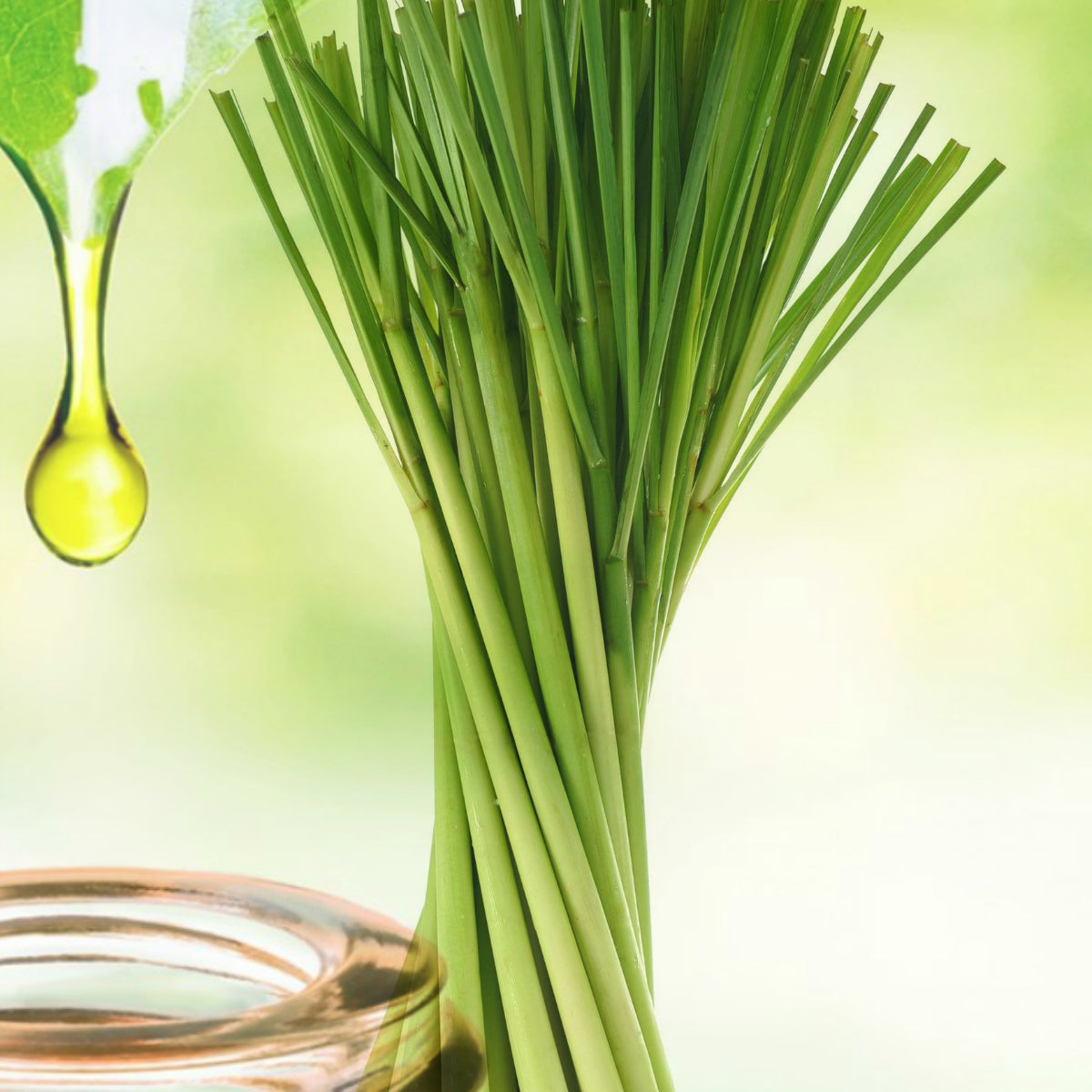 Seed Face Body Lip Care offers pure lemongrass essential oils