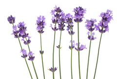 Seed Body Care offers Real Lavender Essential Oil