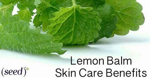 Seed shares the benefits of lemon balm