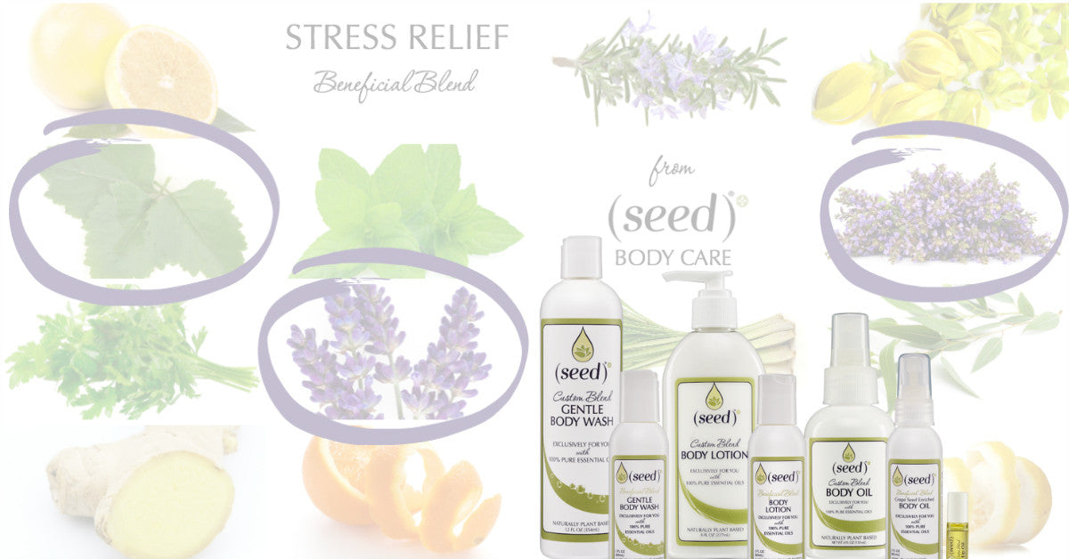 Seed Stress Relief Body Wash Lotion Cream Oil with natural lavender patchouli and clary sage essential oils