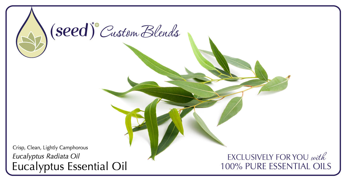 Seed Custom & Beneficial Blends Body Care now features Eucalyptus Essential Oil