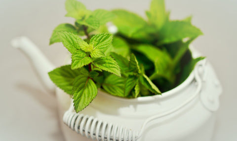 Seed recommends peppermint essential oil to soothe and cool the skin
