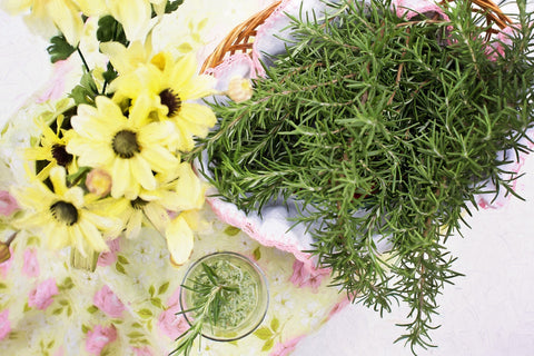 Rosemary herbs and essential oils for Oily Skin by Seed Body Care