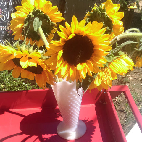 Sunflower Symbolism Seed Blog