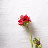Pin Cushion Flower Stem