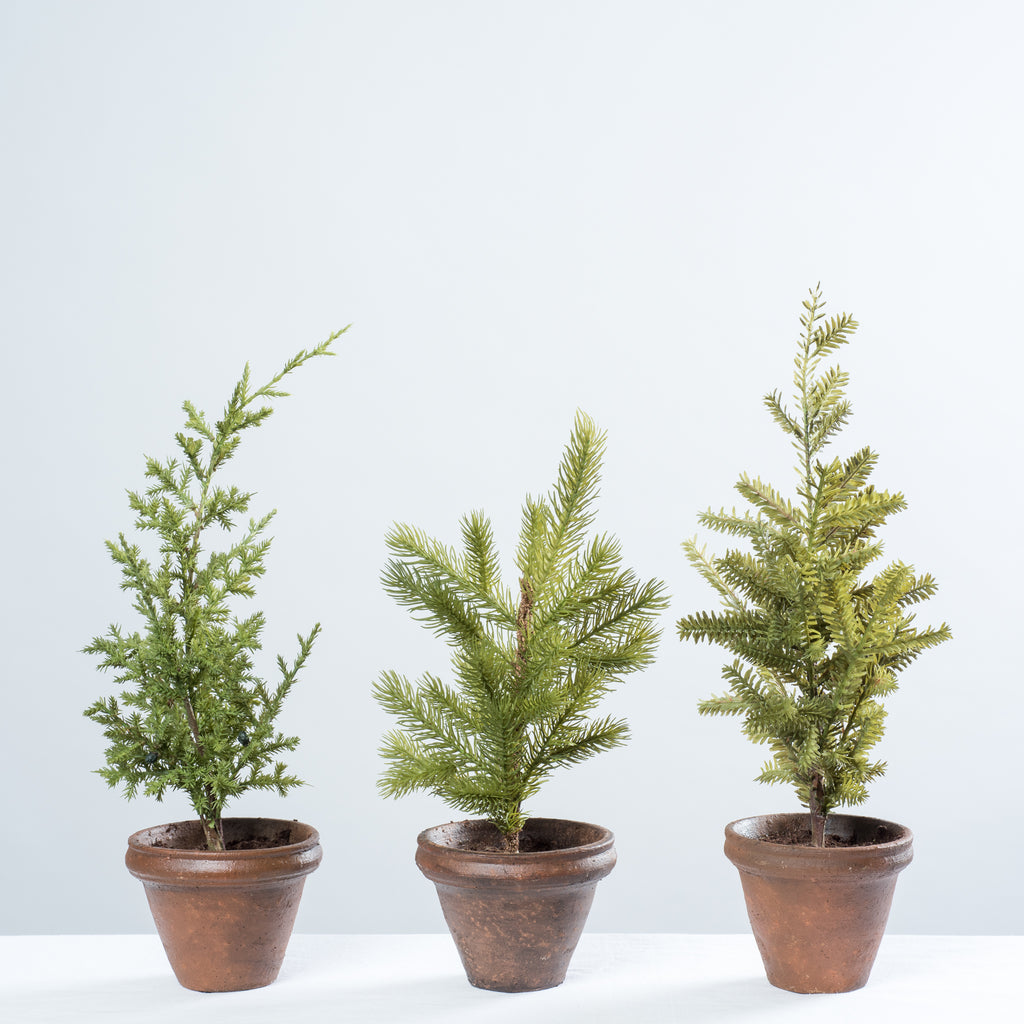 little potted christmas tree - Potted Christmas Tree