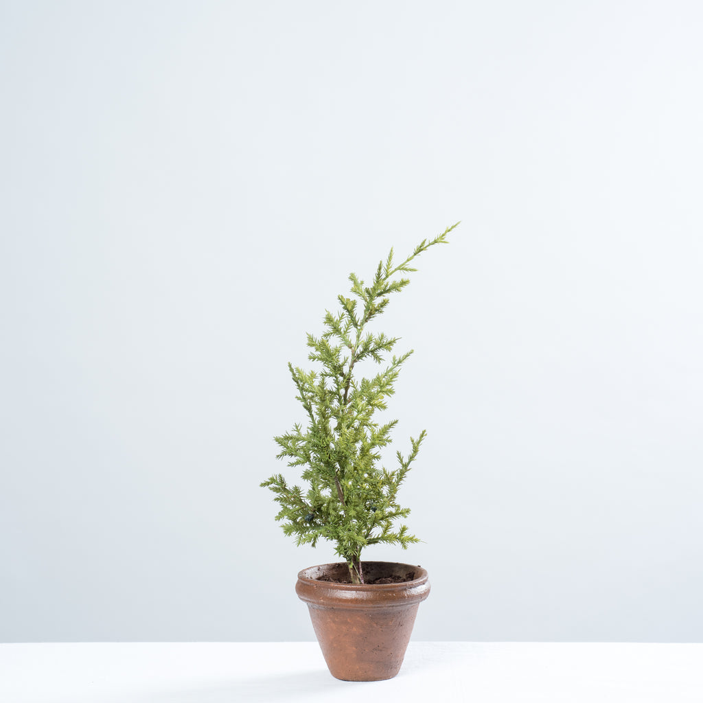 Little Potted Christmas Tree