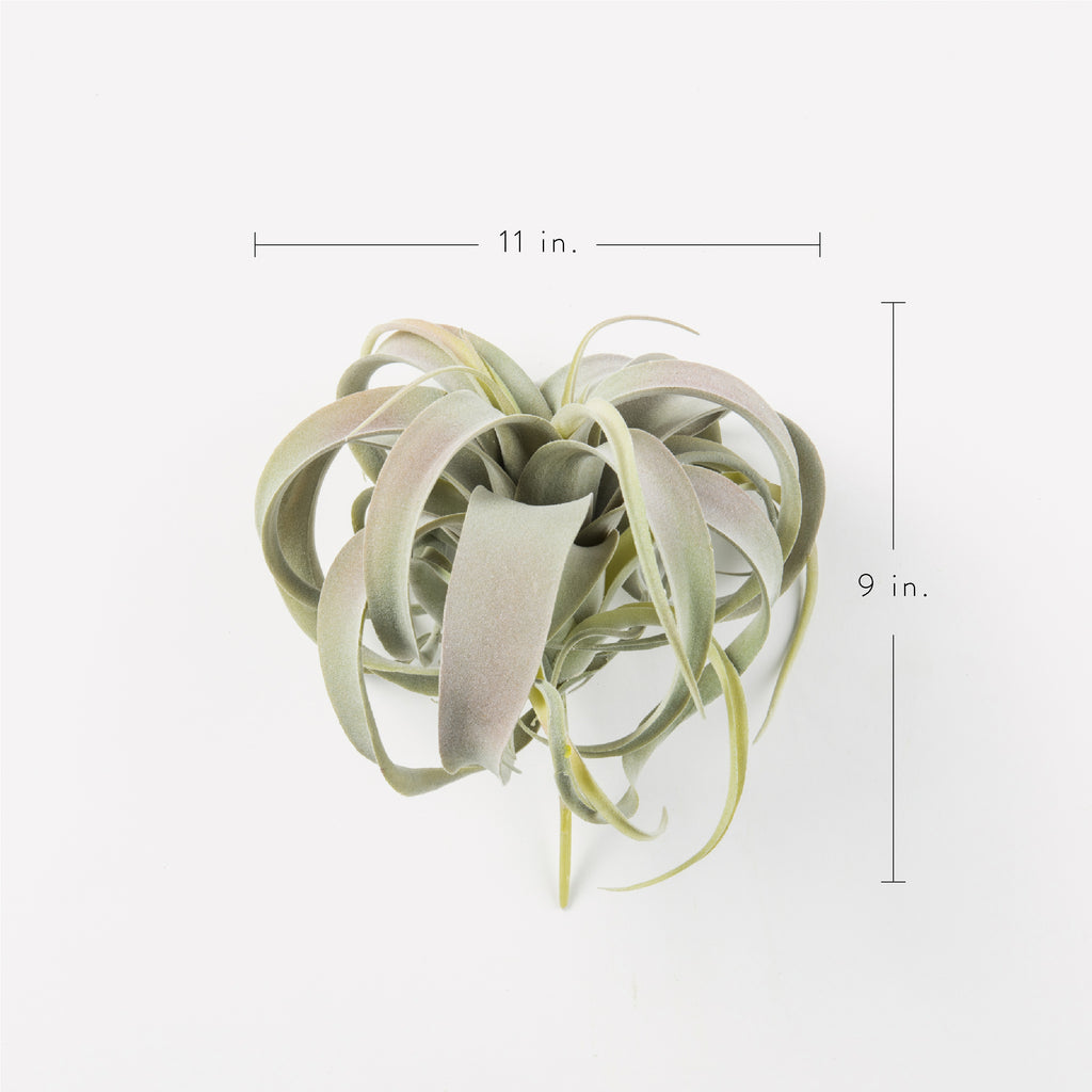 Faux Xerographica Air Plant