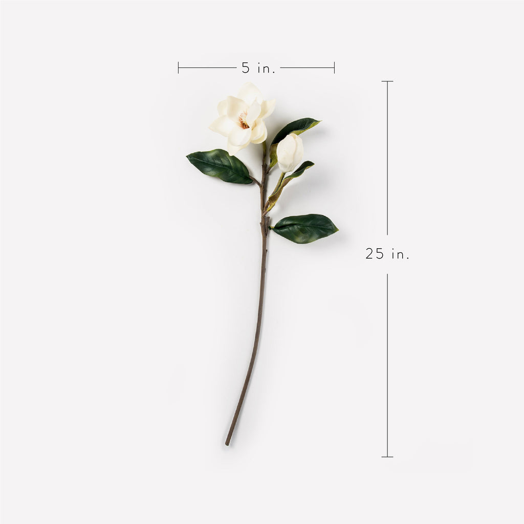 Magnolia Bud and Bloom Stem