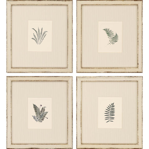 set of four framed sketches of ferns