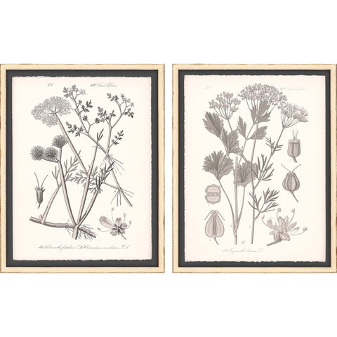 set of 2 vintage floral sketches in cream frames with black mat