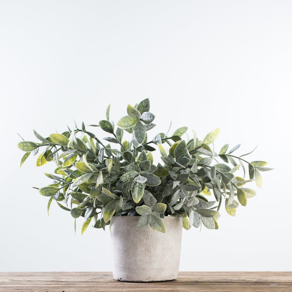 fake sage bush in grey pot