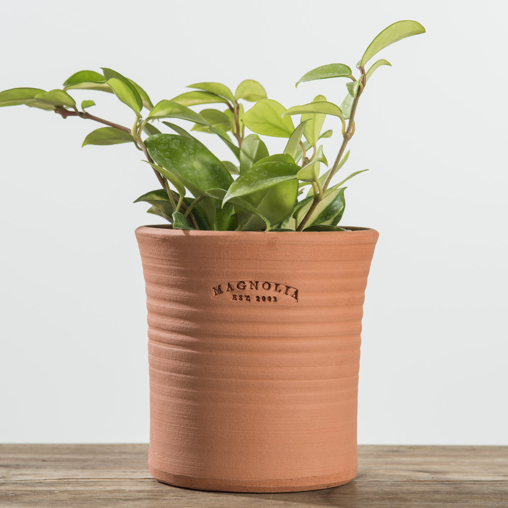 terracotta pot with magnolia established stamp
