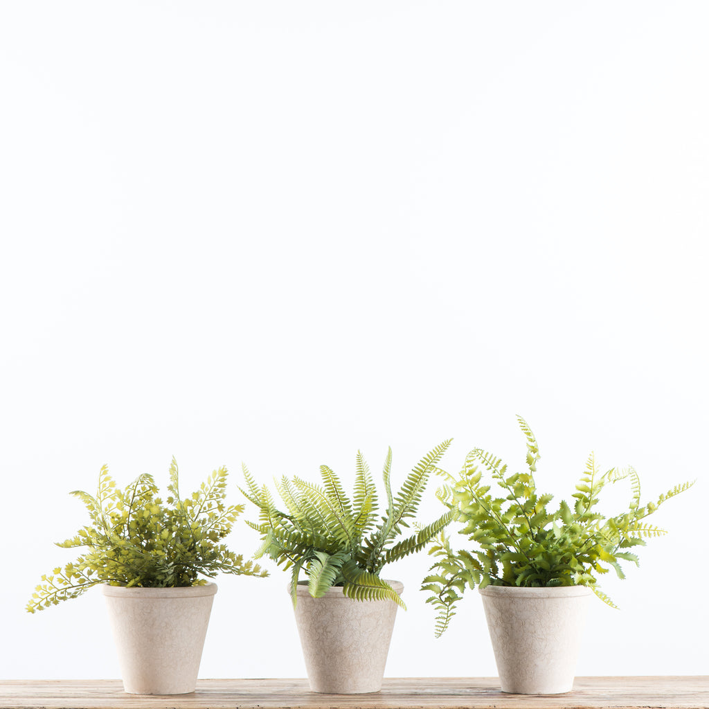three faux potted ferns