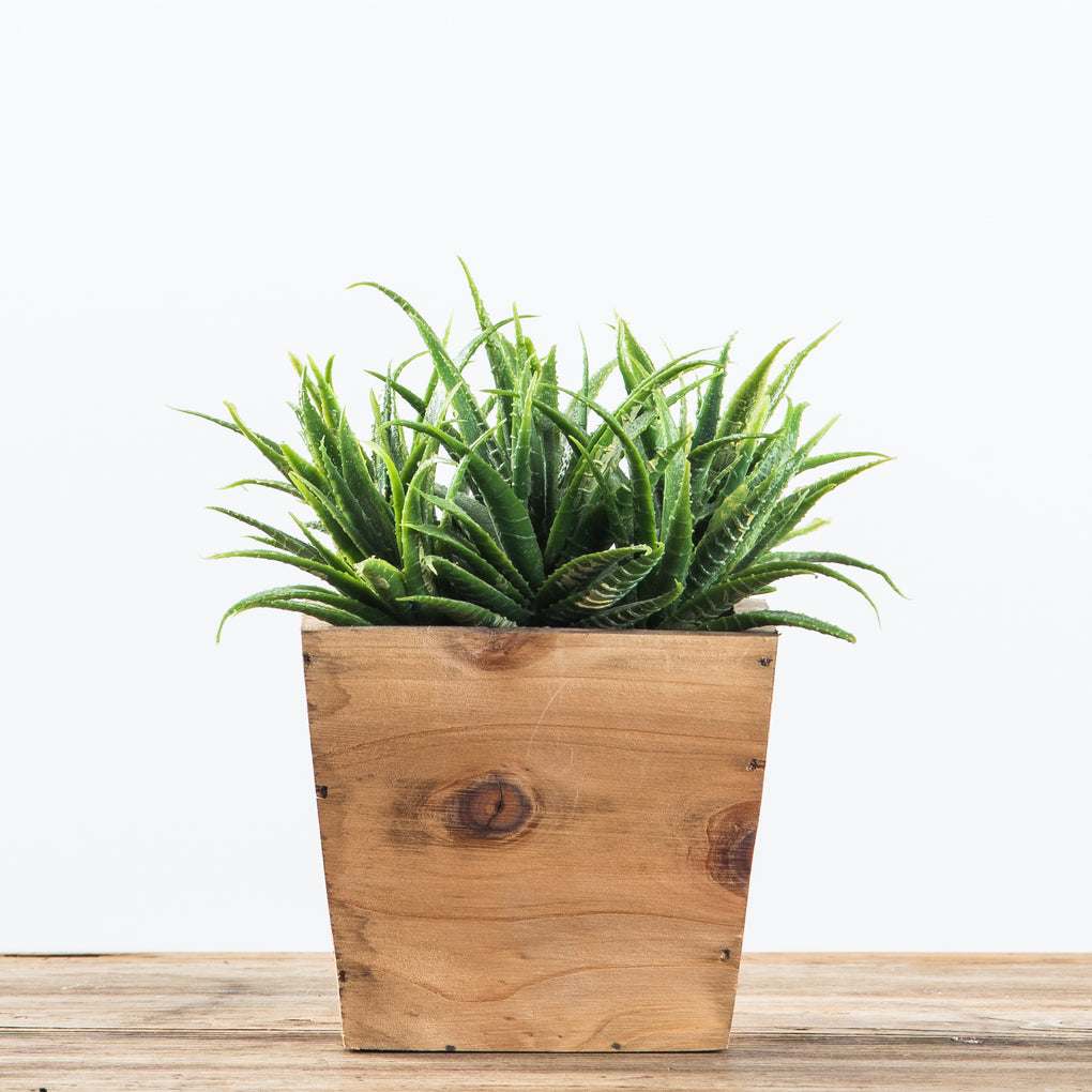 faux aloe succulent in a wooden box
