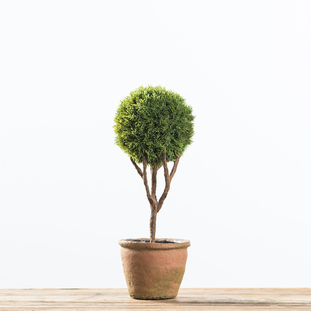 cypress topiary