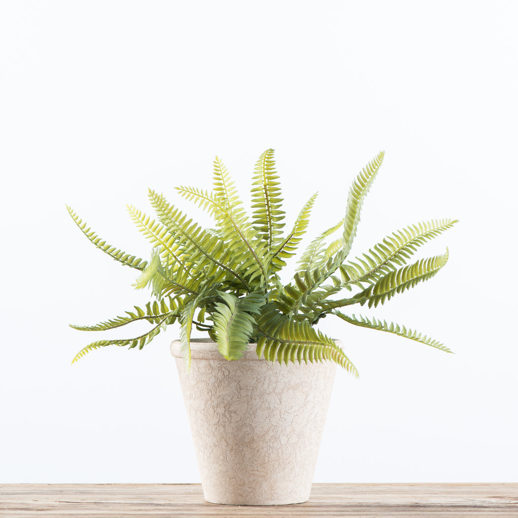 faux potted fishbone fern