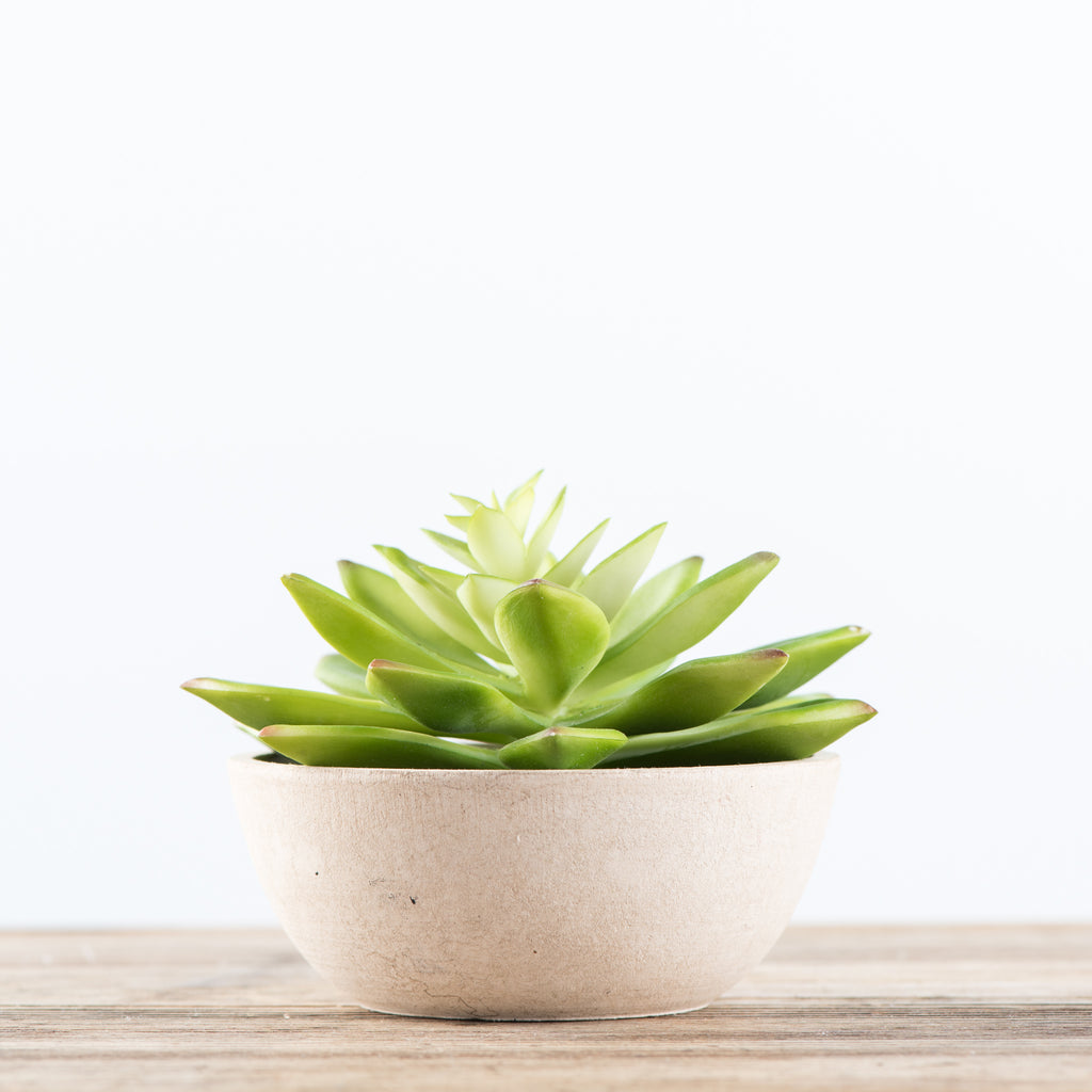 faux light green succulent in pot