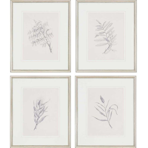 set of 4 sketches of different plants in off-white frame with white mat