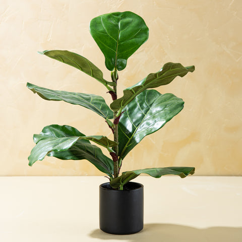 small faux fiddle leaf fig plant in black pot
