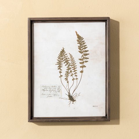 wood framed pressed botanical print art