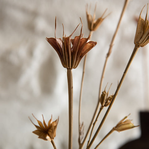 real dried love in a mist stems