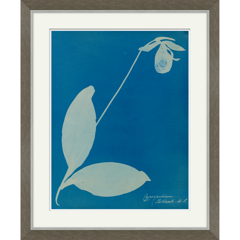 wooden framed blue print of a plant