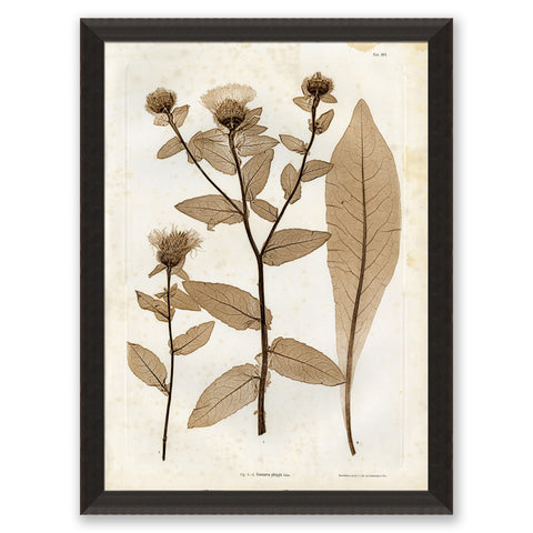 art print of preserved plants in wooden frame
