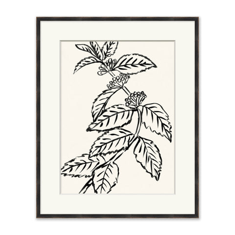 framed sketch drawing of a plant in black and white
