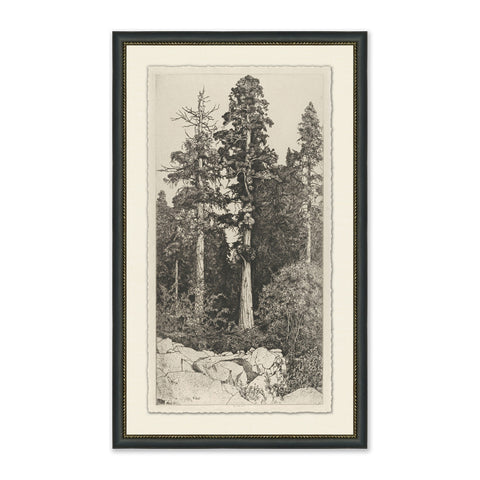 portrait sketch of tall trees in forest in black frame with cream mat