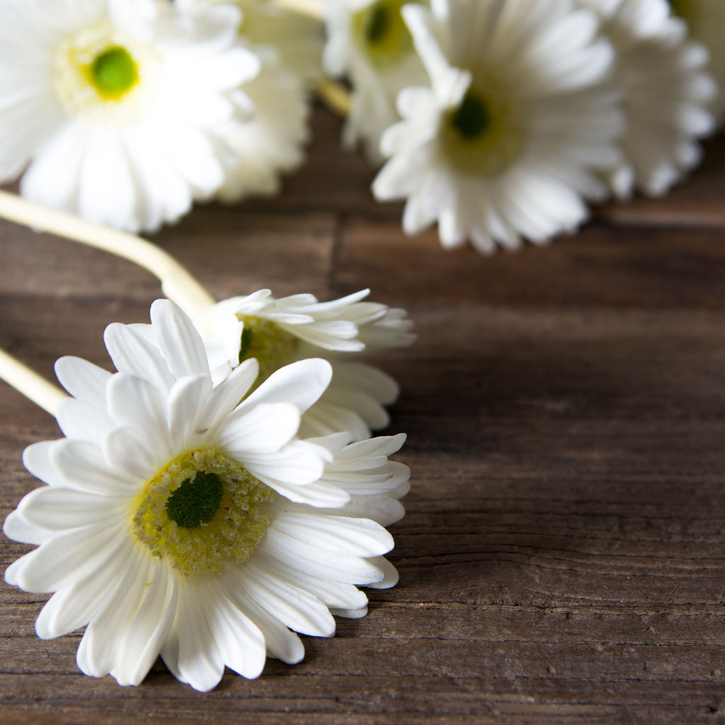 White Daisy Stem