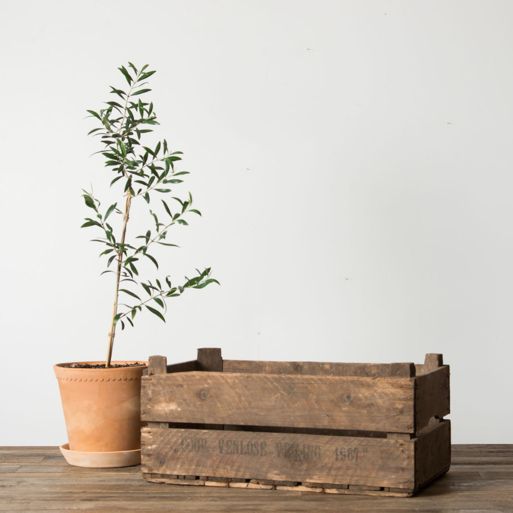 Vintage Wood Slat Crate