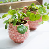 small orange clay planters