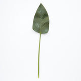 large faux fig leaf